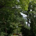 雑木林の日
